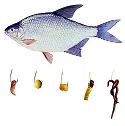 на какую приманку ловят рыбу на дону